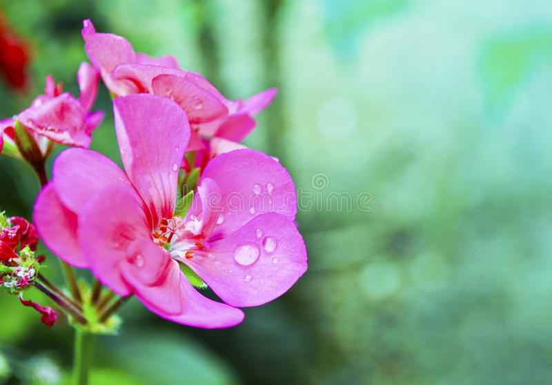 Wet flower stock photo