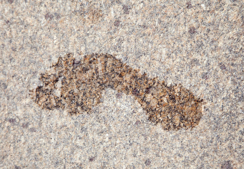 Download Wet footprint on granite stock photo. Image of foot, step - 25016570