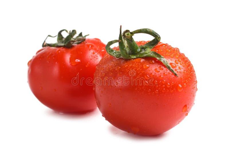 Wet Fresh Tomato Royalty Free Stock Images