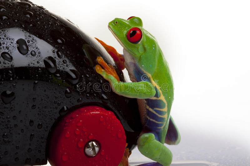 Download Wet Frog stock image. Image of crazy, damp, abstraction - 12515795
