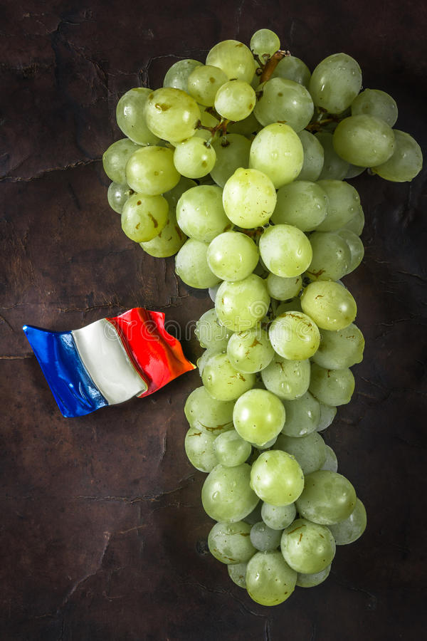 Download Wet grape stock photo. Image of leather, green, fresh - 32927320
