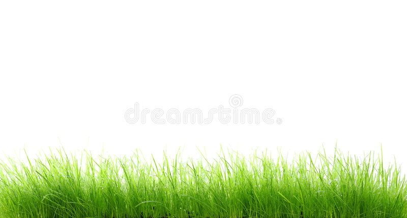 Wet grass stock photo