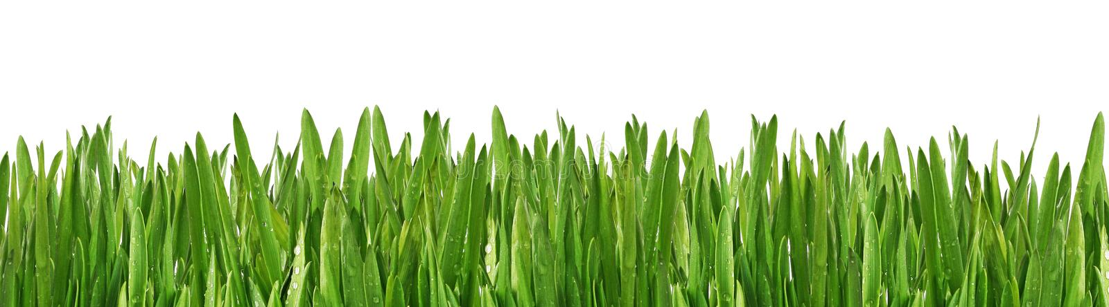 Download Wet grass stock photo. Image of beauty, outdoors, yard - 8133436
