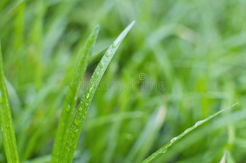 Download Wet Grass Detail stock photo. Image of vegetation, outdoors - 19261086