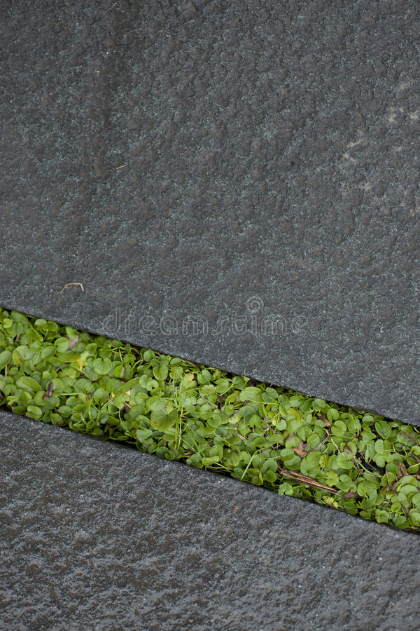Download Wet Green Grass Growing Between Stone Stock Photography - Image: 28204822