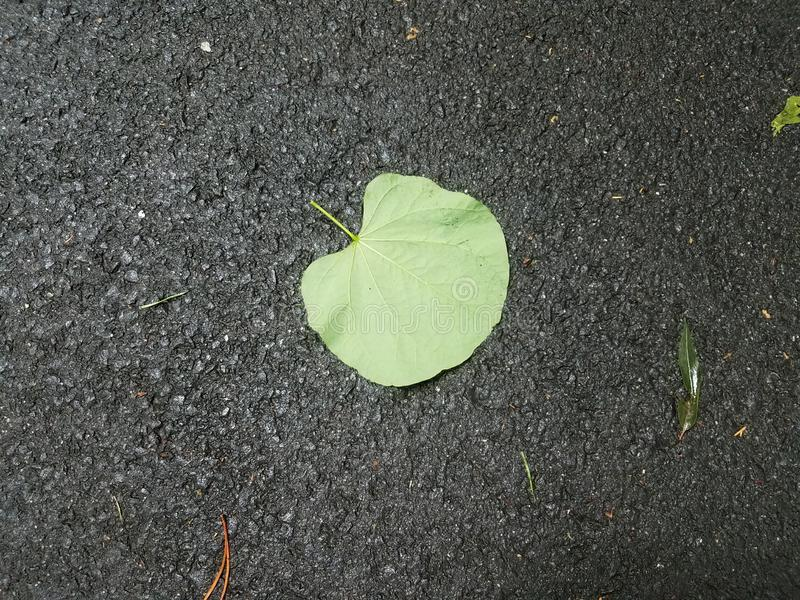 Wet green leaf on the ground with black asphalt. Or pavement royalty free stock photography