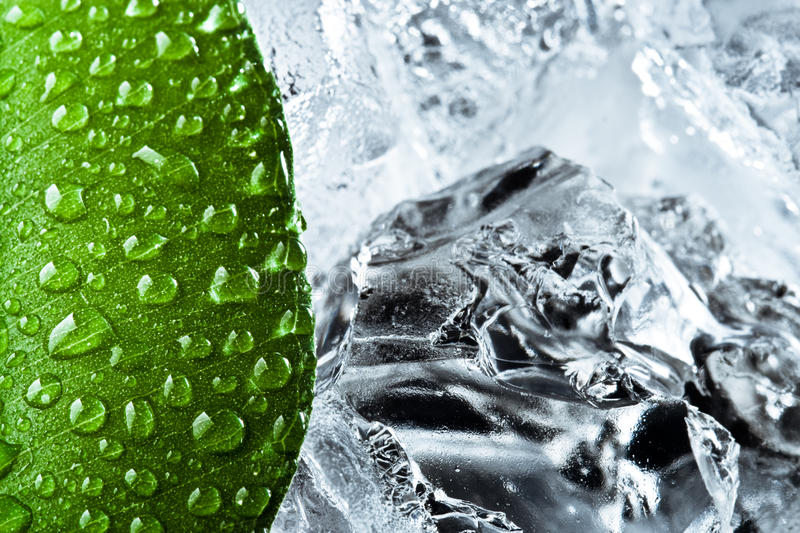 Download Wet green leaf with ice stock image. Image of freshness - 10824485