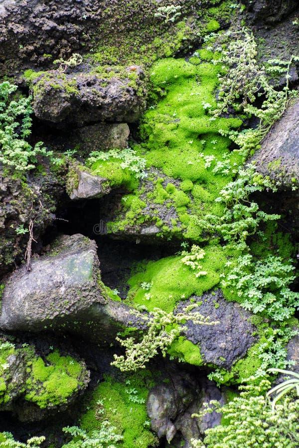 The wet green moss on dark rocks royalty free stock photos