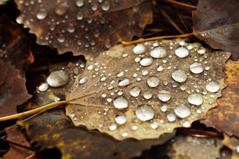 Wet Grunge Leaf. Stock Photos