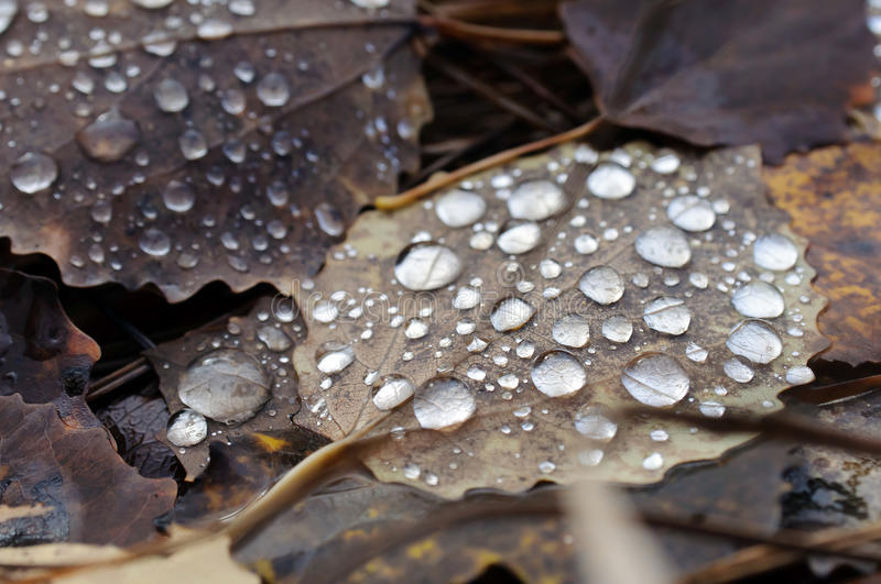 Download Wet grunge leaf. stock photo. Image of grunge, fall, structure - 21415212