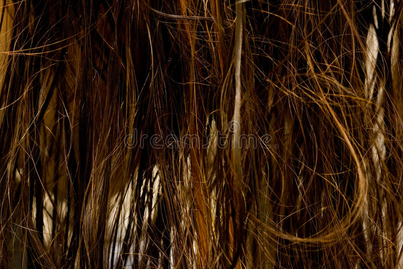 Wet hair stock photos