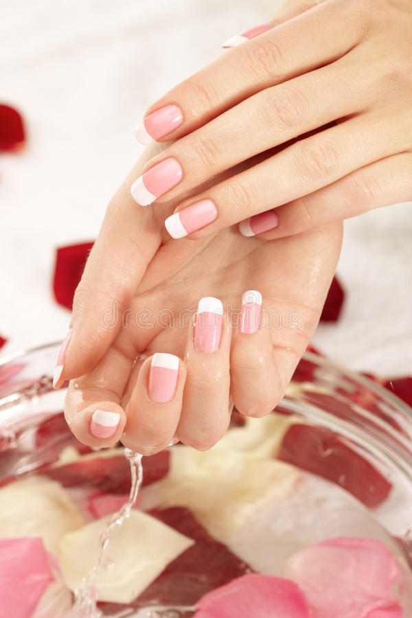 Download Wet hand and petals stock photo. Image of female, french - 17974896
