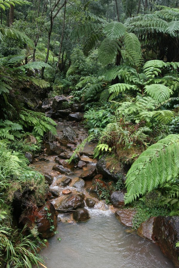Free Wet In The Rain Forest Stock Photography - 318472