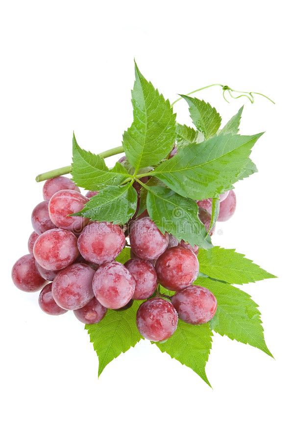 Wet Juicy Red Grapes Stock Photography
