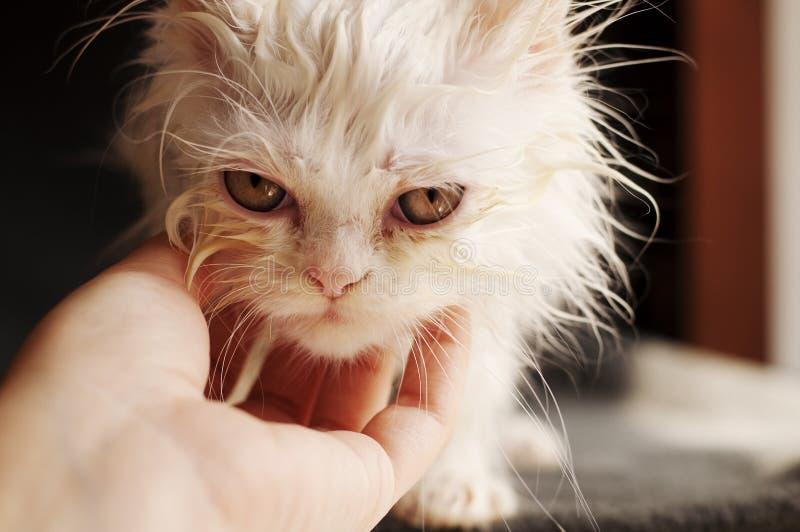 Download Wet Kitten Stock Images - Image: 32209524