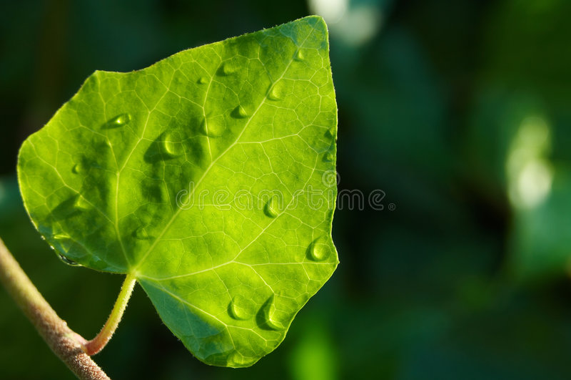 Download Wet leaf stock image. Image of copy, backlight, branch - 2649697