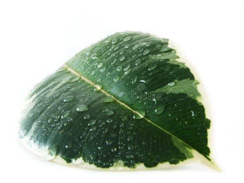Download Wet leaf stock photo. Image of composition, leaf, flower - 3321398