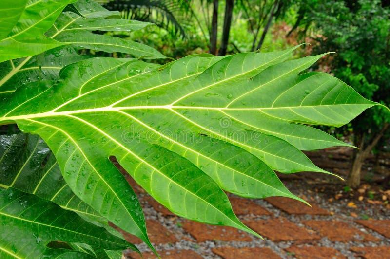 Wet leaf in the garden