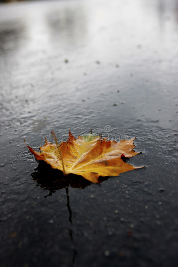Download Wet leaf on road. stock image. Image of natural, yellow - 27522485