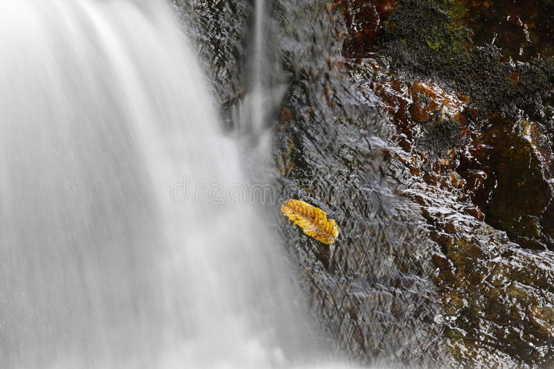 Download Wet Leaf On Rock. Royalty Free Stock Photo - Image: 26455055