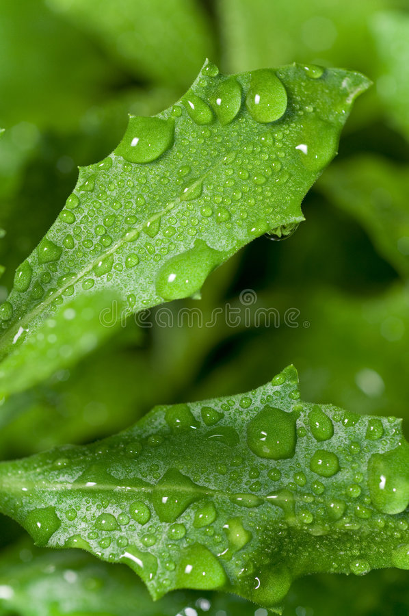 Wet leaves stock photo