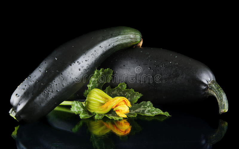 Wet mature courgettes with flowers on black background. Dewed mature two courgettes with flowers on black background royalty free stock photo