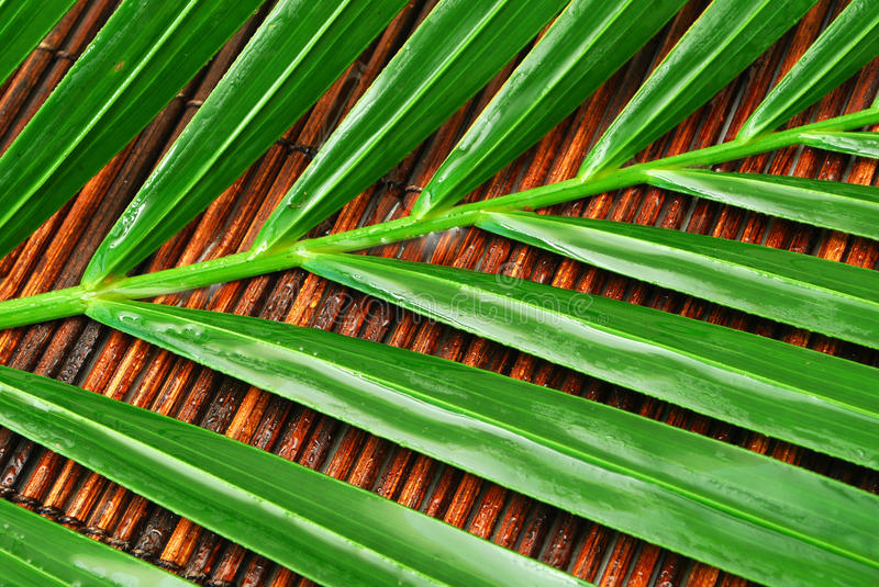 Download Wet palm leaves stock photo. Image of water, brown, lines - 11037086