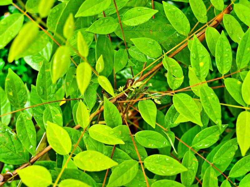 Wet Plant Stock Image