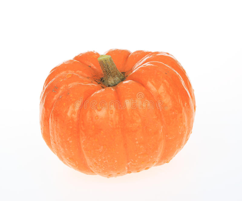Download Wet Pumpkin stock photo. Image of white, photography - 11659364
