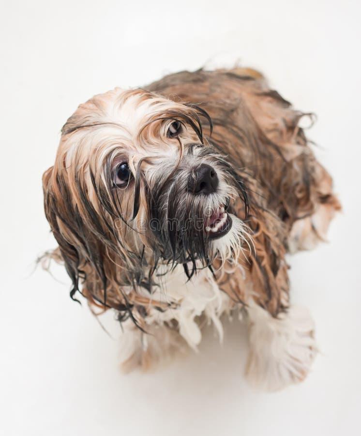 Wet puppy stock image
