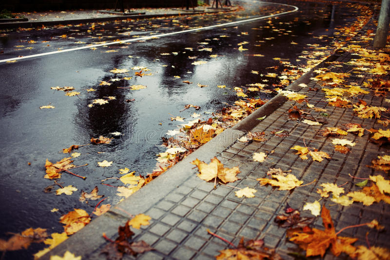 Wet road and leaves. Horizontal color image of a wet road covered with brown and yellow leaves on an autumn rainy day royalty free stock images