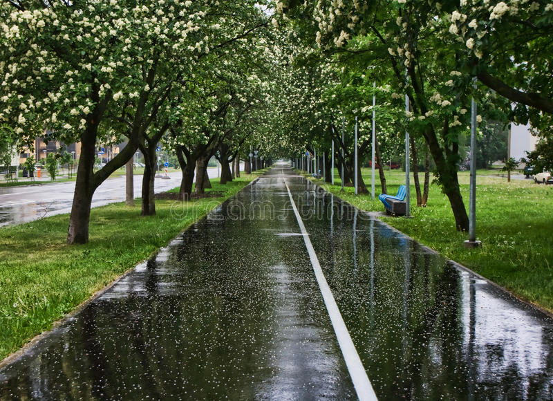 Wet road in tree lined park. Closeup of wet tarmac road in tree lined park stock image