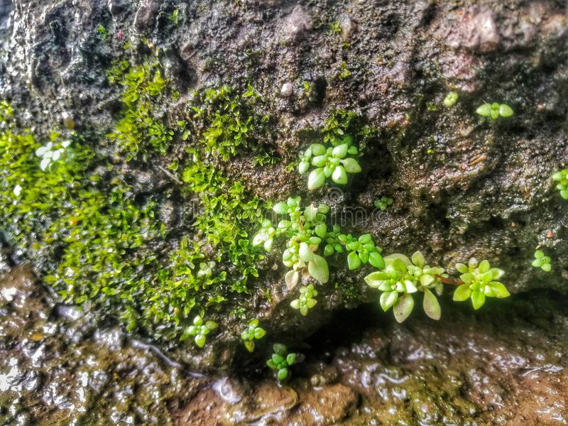 the wet rock with moss. royalty free stock photography