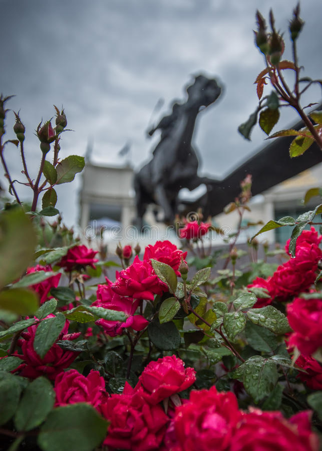 Wet Roses and Barbaro Statue. At Churchill Downs stock photos