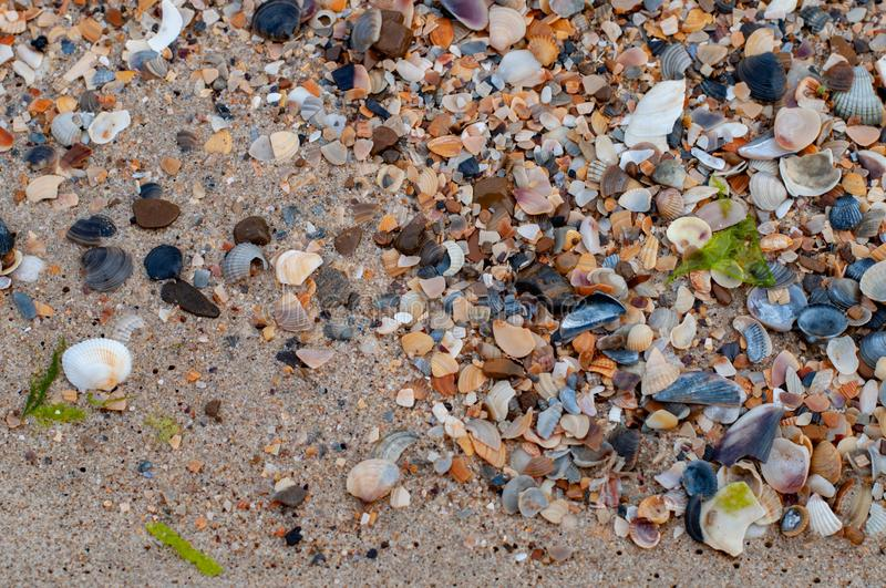 Wet sand with scattered seashells and small colorful sea stones royalty free stock photos