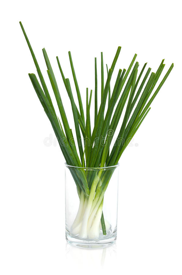 Download Wet Spring Onion In A Glass Stock Photo - Image of standing, root: 31106118