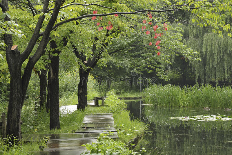 Download Wet summer stock photo. Image of pathway, green, rain - 22128452