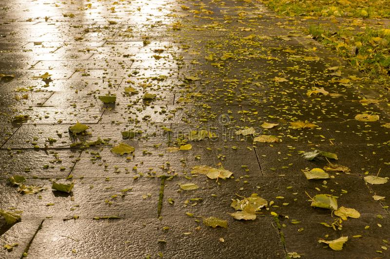 Tiled park ground at autumn night. background. Wet tiled park ground at autumn night. background stock images