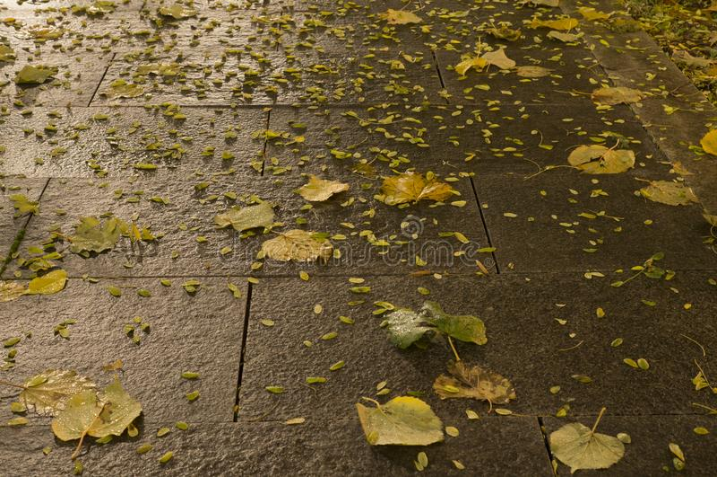 Tiled park ground at autumn night. background. Wet tiled park ground at autumn night. background royalty free stock photo