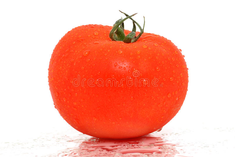 Download Wet Tomato stock image. Image of water, ingredient, produce - 19392235