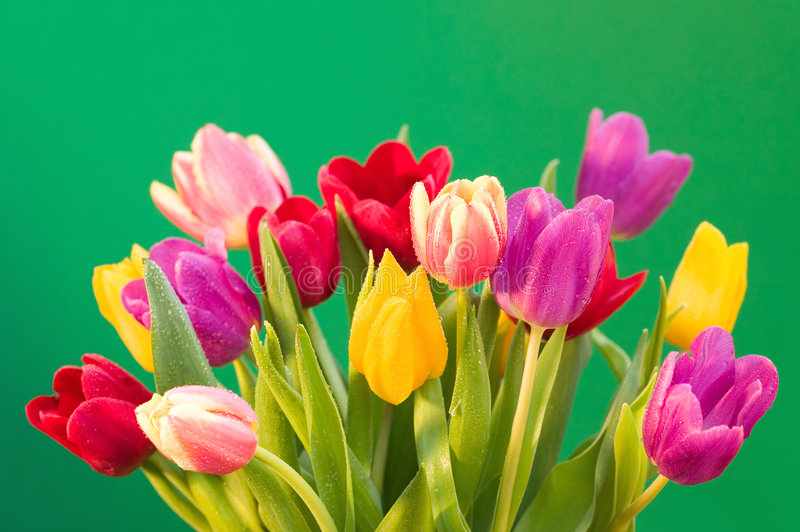 Download Wet tulips stock image. Image of flower, flora, purple - 4177875