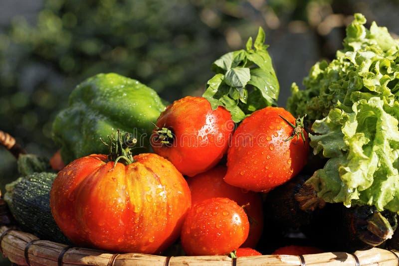 Wet Vegetables Stock Photo