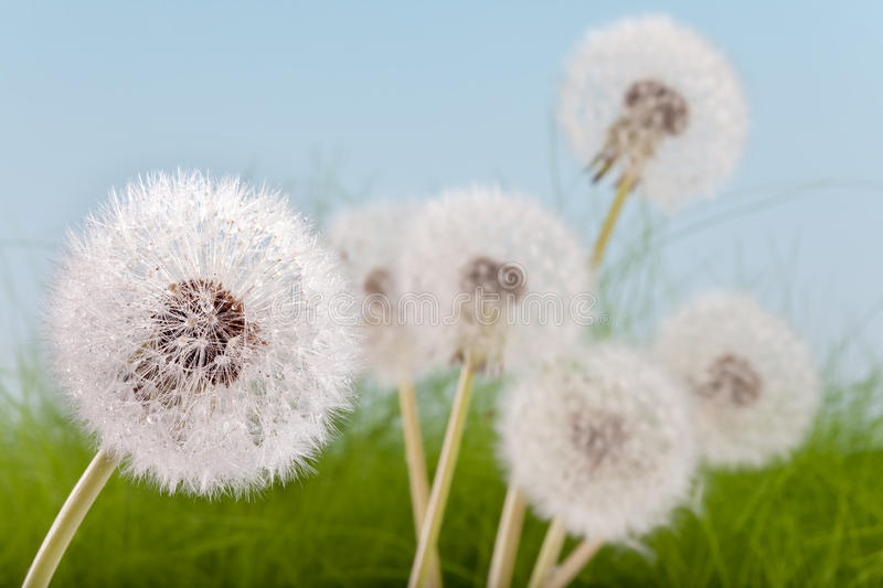 Download Wet wildflowers stock image. Image of delicate, spring - 14204705