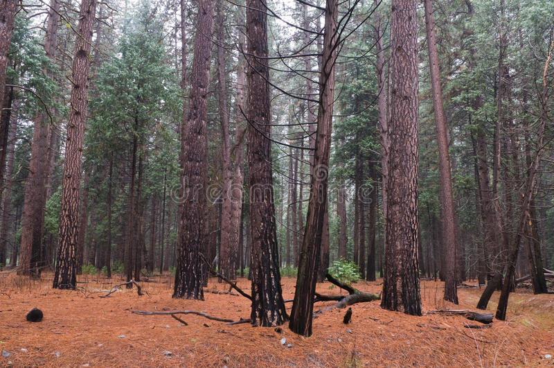 Wet Woods Stock Image