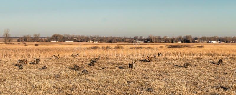 Wetenschappelijk Bluestem en Natuurgebied, Minnesota stock foto