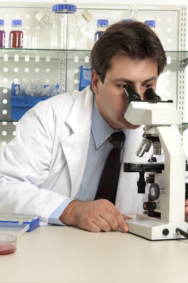 Wetenschapper die door microscoop kijkt royalty-vrije stock foto's