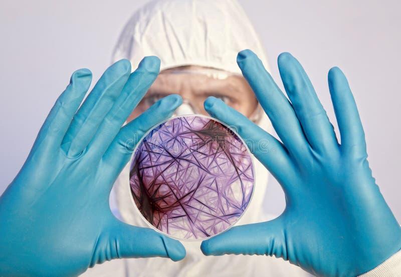 Wetenschapper die een petrischaal met viruscellen houden stock foto