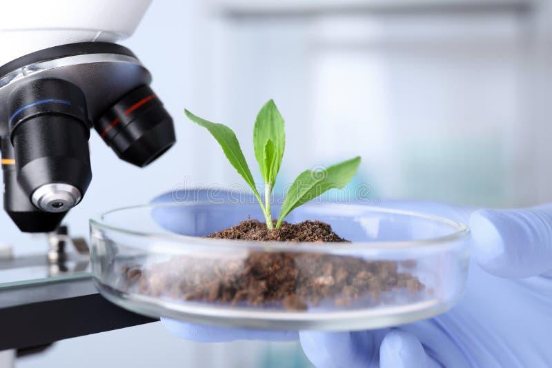 Wetenschapper die groene installatie met microscoop in laboratorium onderzoeken royalty-vrije stock afbeeldingen