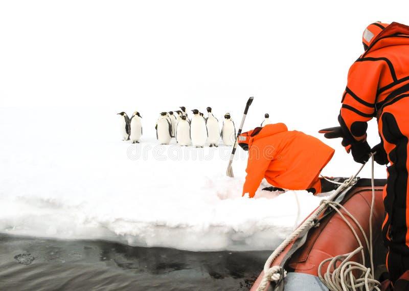 Wetenschappers die aan een groep keizerpinguïnen naderbij komen royalty-vrije stock fotografie