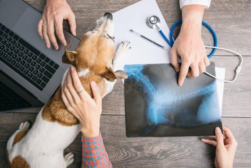 Weterynaryjna egzaminacyjna konsultacja z promieniowaniem rentgenowskim Pies, właściciele i lekarek ręki na stole z komputerem fotografia royalty free